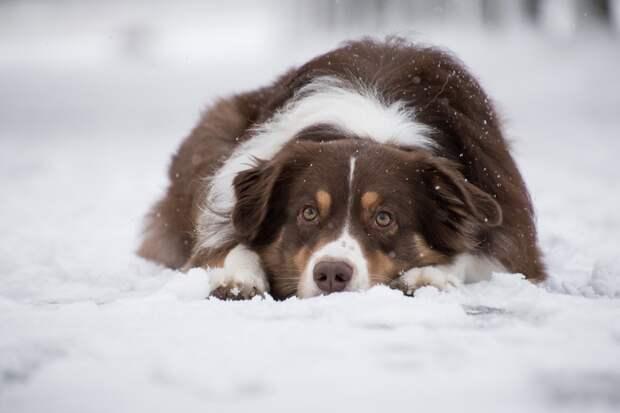 Небольшой снег ожидается в Удмуртии в четверг