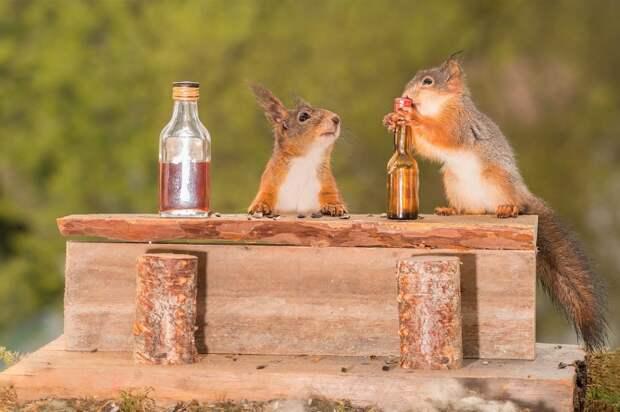 Фотограф делает самые милые фото белочек, потому что подружился с ними