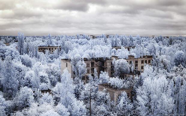 Город Припять буквально тонет в зелени деревьев. Фото: Vladimir Migutin.