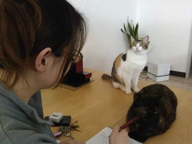 Котоофис для японцев