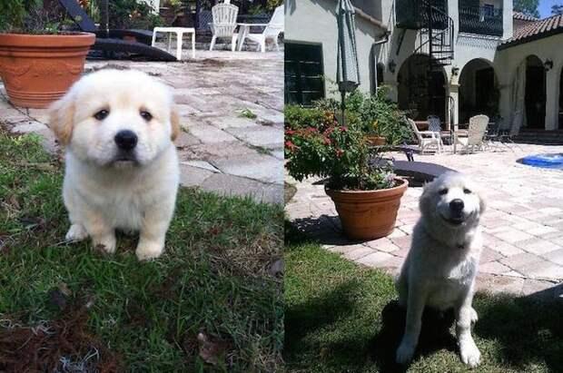 Очаровательные щенки, ставшие любимыми собаками животные, собаки, щенки
