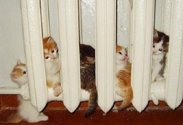 Каждый нашел свое уютное местечко.