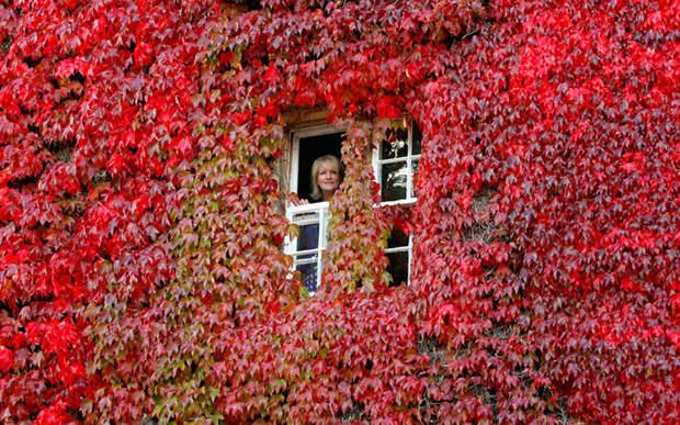 Цвета осени в Великобритании