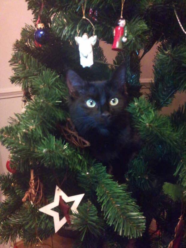 26. Первое Рождество Коко елка, кошка, подборка
