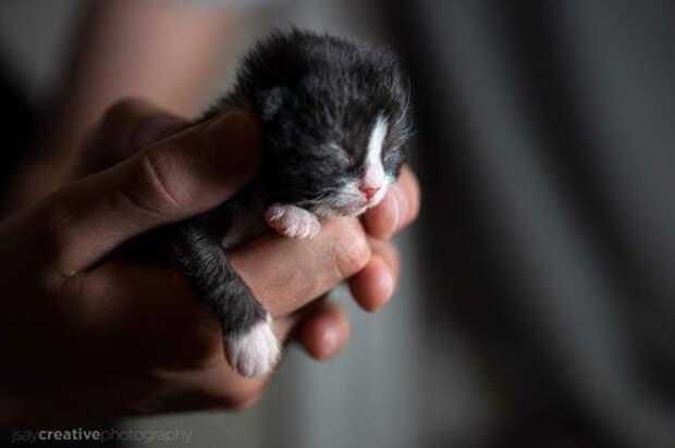 25 восхитительных снимков маленьких котят, которые растрогают любое сердце