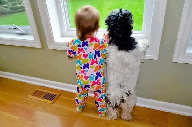 11. Развитие любви к труду дети, домашние животные, собака, собаки