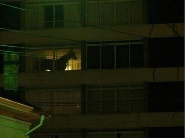Знаменитый балконный конь  девушки, животные, прикол, юмор