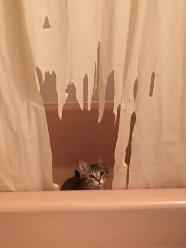 Это была плохая идея - оставить кота в ванной...