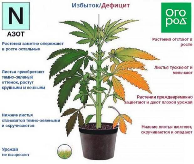 недостаток и избыток азота у растений