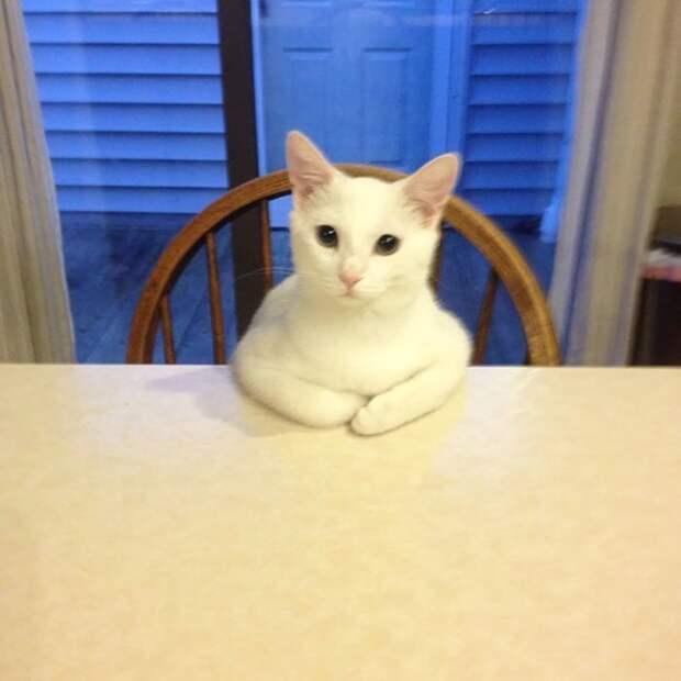 """7. """"Так мой кот просит еду"""" домашний питомец, животные, забавно, кот, котики, прикол"""