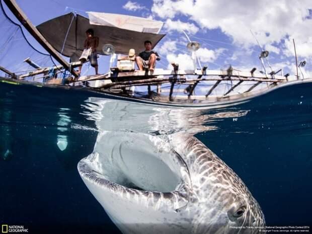 Удивительные фотографии, сделанные для конкурса National Geographic  fun, People Are Awesome