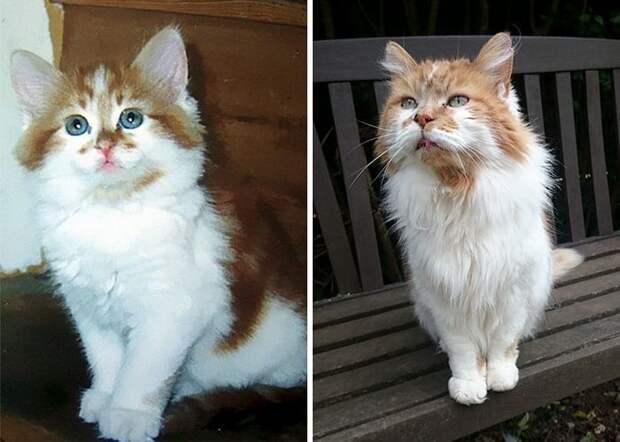 3. Кошка по кличке Раббл котенком и в возрасте 30 лет. Раббл - одна из самых старых кошек в мире