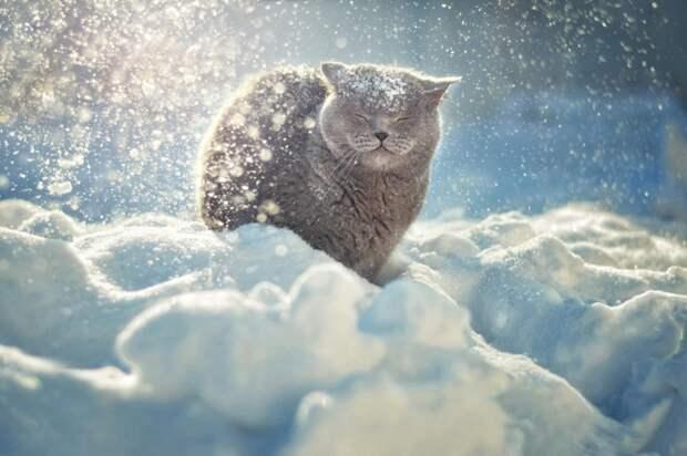 37 фотографий животных, которые вызывают улыбку - 19