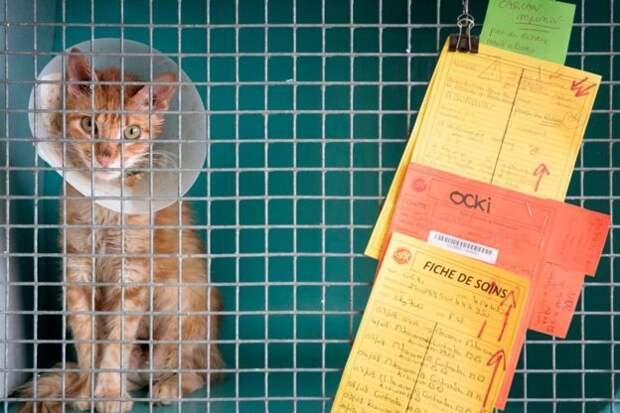 Кошка в приюте во Франции