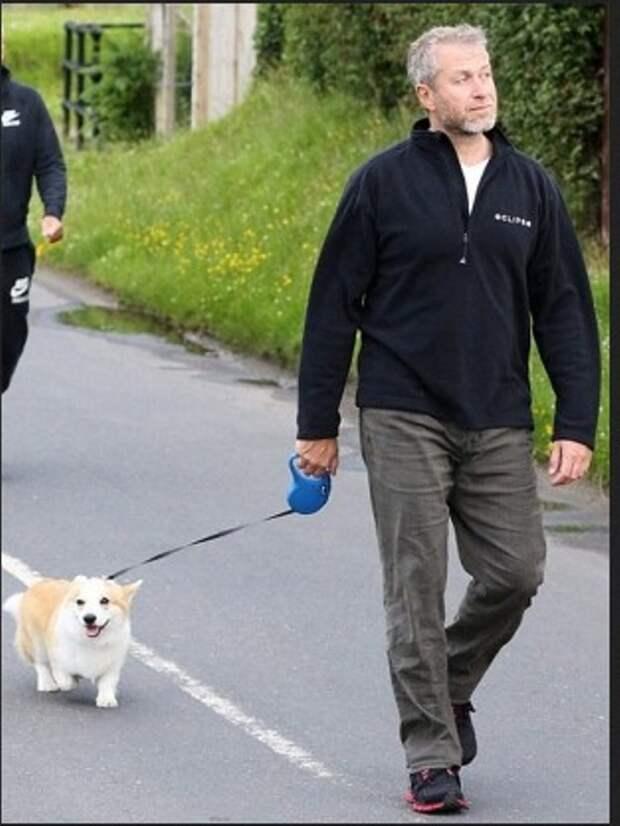 Собака породы корги бизнесмен, животные, политик, факты