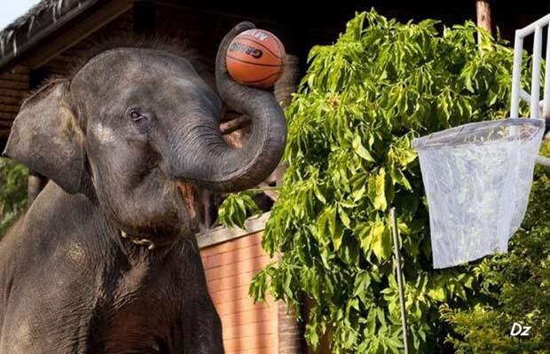 Прикольные фотографии слонов