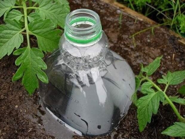 Капельный полив при помощи... пластиковой бутылки