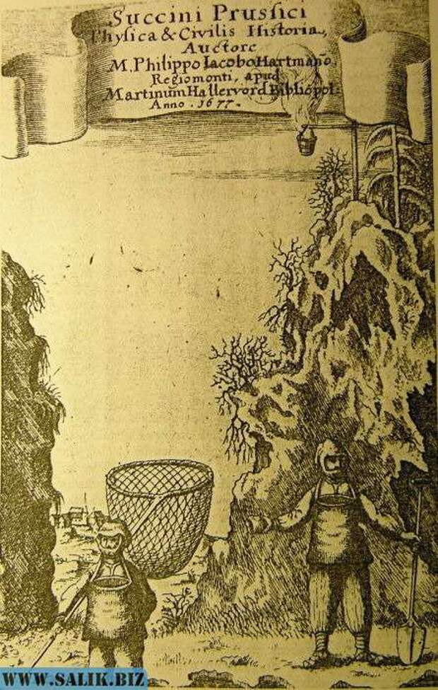 Европейская гравюра 1677 года изображает ловцов янтаря с сачками.