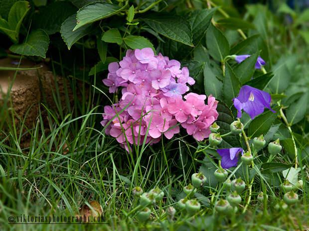 Сад Viktorii Mulli