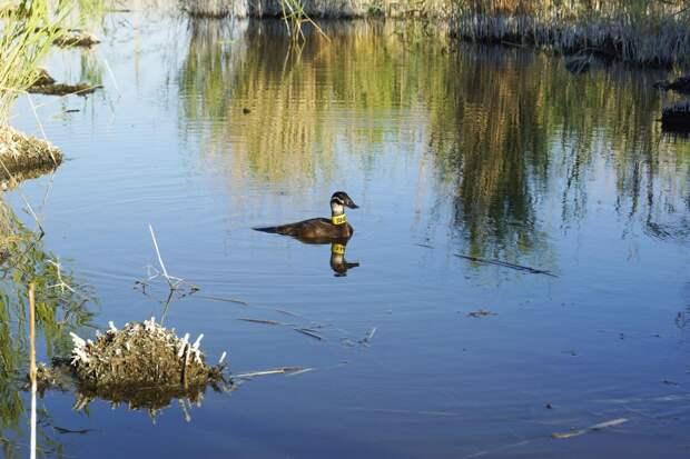 Три сайта с предложениями о продаже краснокнижных птиц заблокировали по решению суда