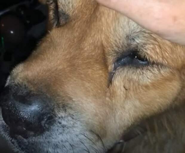 Решив воплотить мечту 7-летнего сына, семья пришла в приют за щенком, а ушла с самым старым псом