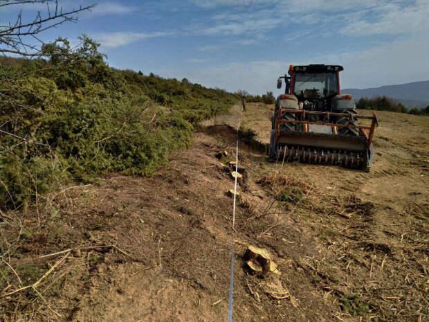 Прокуратура проверит масштабное уничтожение можжевельника в Севастополе