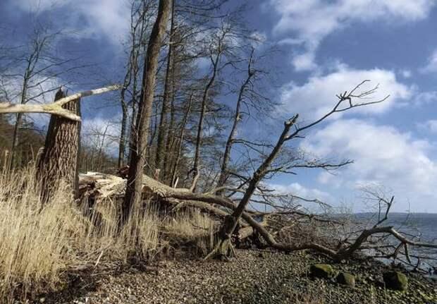 В пострадавших от урагана районах Пензенской области объявят режим ЧС