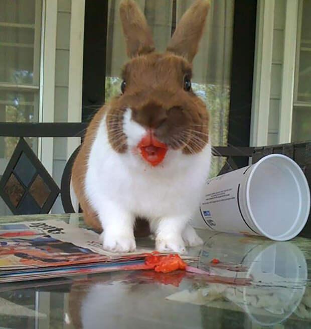 Наслаждается клубникой животное, фрукт, ягода