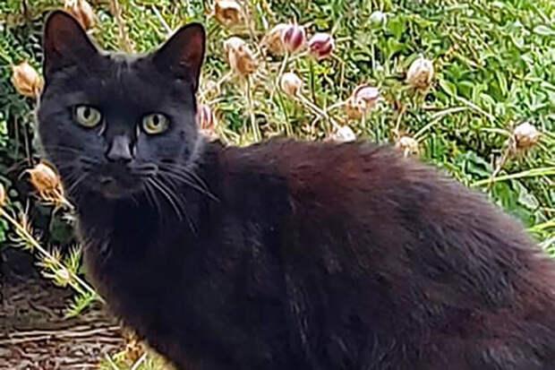 Британский кот помог спасти женщину из оврага и стал местным героем