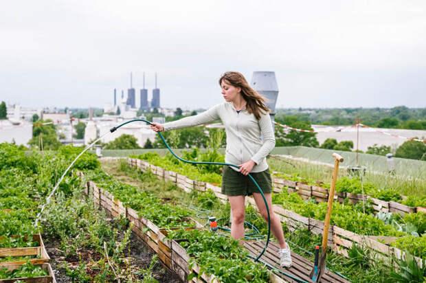 Вертикальные огороды: сельское хозяйство в городском ландшафте