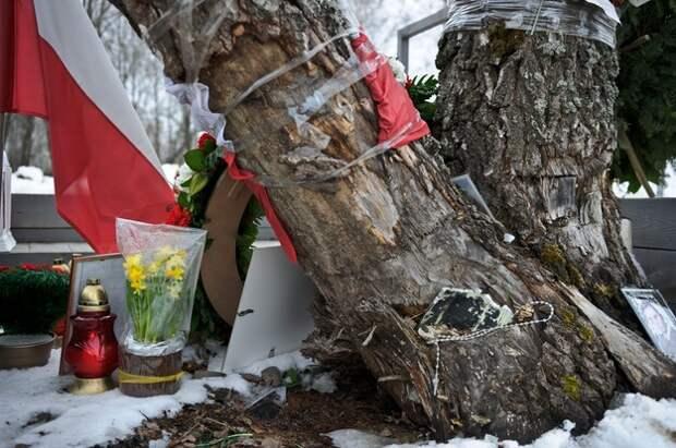 Znicze i kwiaty złożone pod złamaną brzozą, o którą zaczepił prezydencki TU-154M / Wojciech Pacewicz    /PAP