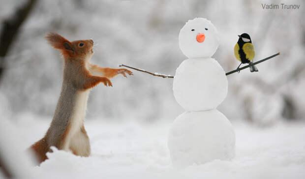 Снеговик. Вадим Трунов, белки, животные, фотограф