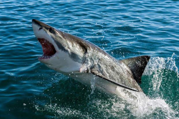 5. Постоянно обжигаю язык горячей пиццей Белая акула, фото