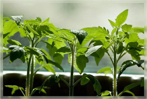Подготовка семян к посеву