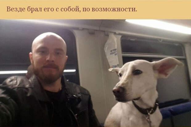 Как пес отплатил своему хозяину за спасение благодарность, пес, спасение