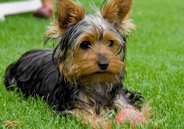10 лучших пород собак для семей с детьми
