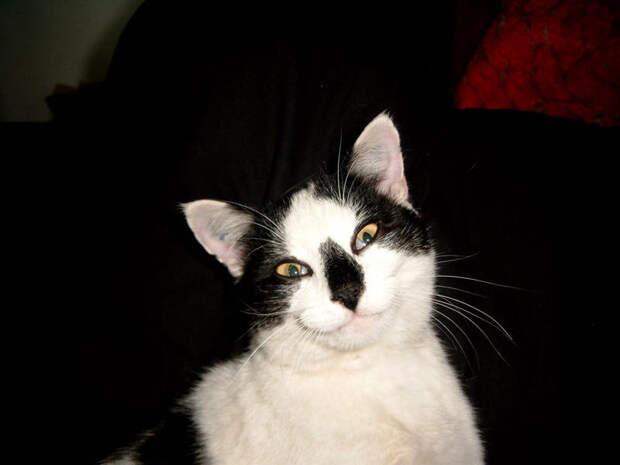 Котофотопозитив  животные, коты, прикол