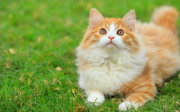 Война между котом и соседкой - он помнит кто его выкинул через забор