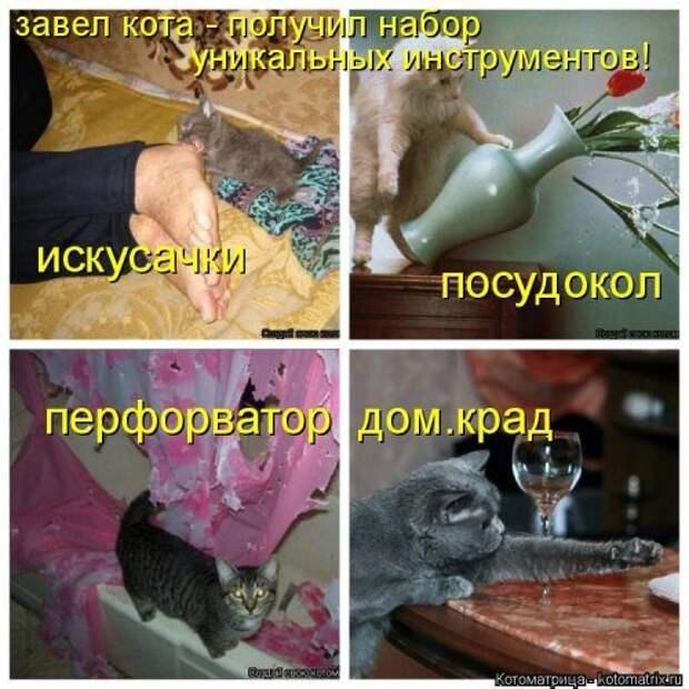 Коллекция лучших котоматриц недели
