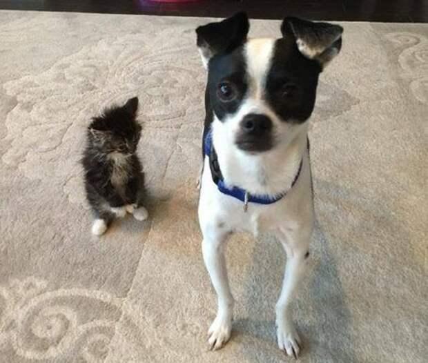 Собака, встретив котёнка, решает, что всегда будет его защищать