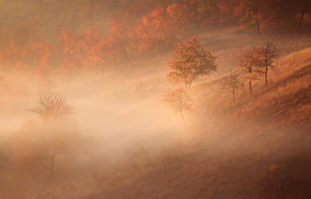 Тлен и безысходность: лучшие фотографии осенних туманов