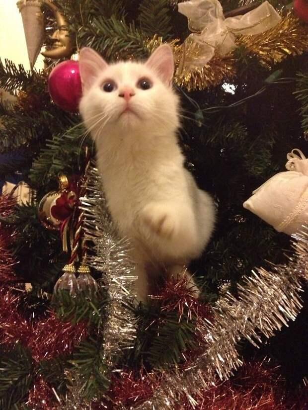 42. Вот еще один шарик упал елка, кошка, подборка