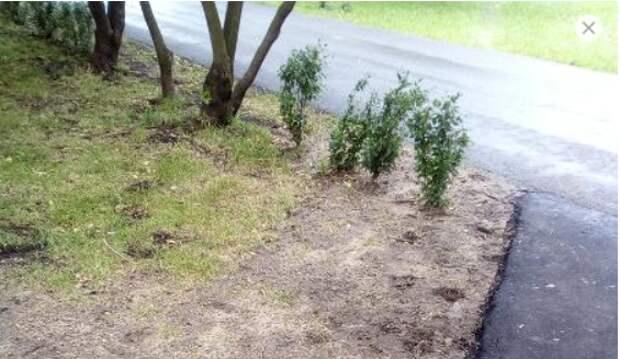 На Дубравной засеяли вытоптанный газон