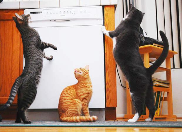 41.  кот, поза