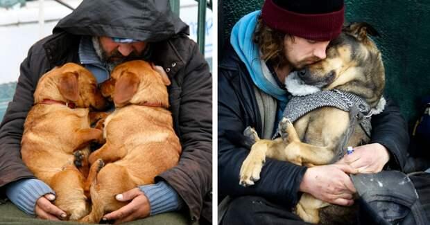 1.  бездомный, любовь, собака