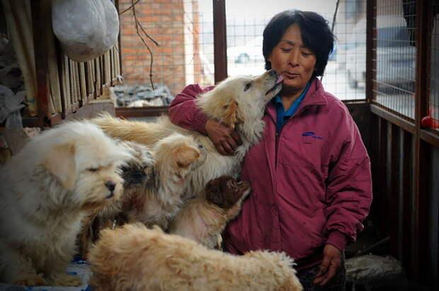 Yang Xiaoyun и спасенные ею собаки