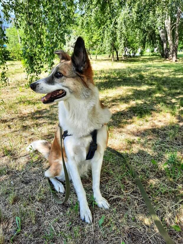 Как гулять со своей собакой? Люди и Закон «против собачников»