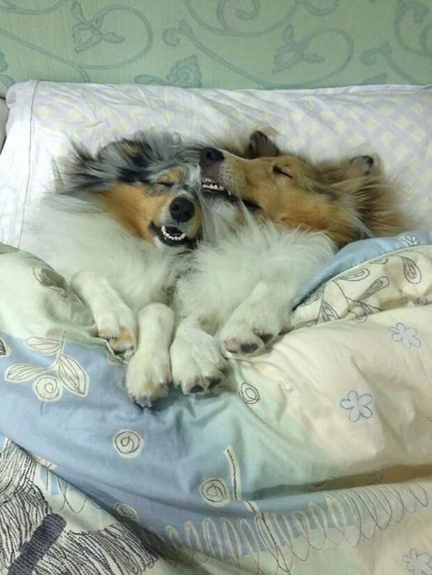 Спят усталые зверушки: