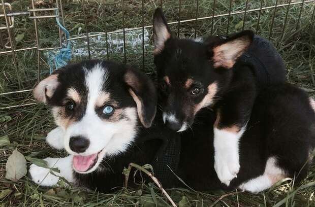 Веселые фотографии щенков, которые непременно поднимут Вам настроение