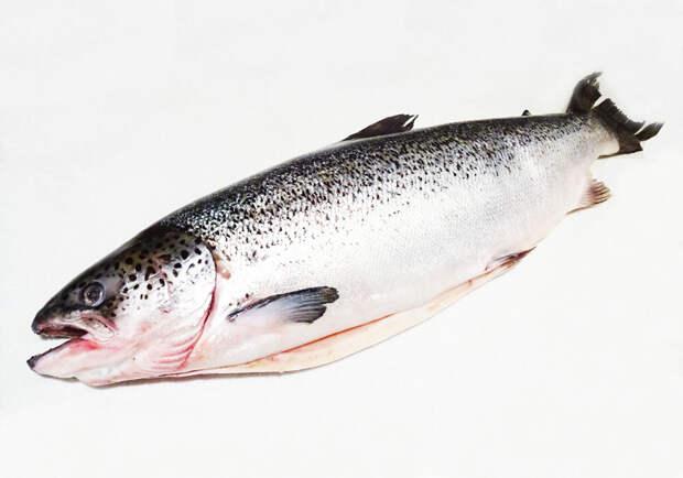Рыба. Вес 4,75 кг. Увесистая.